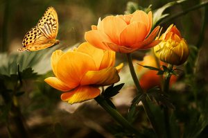 flowers, butterflies, beautiful